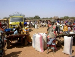 Sécurité alimentaire en Afrique: 60 millions de tonnes de riz pour nourrir ce continent en 2035.