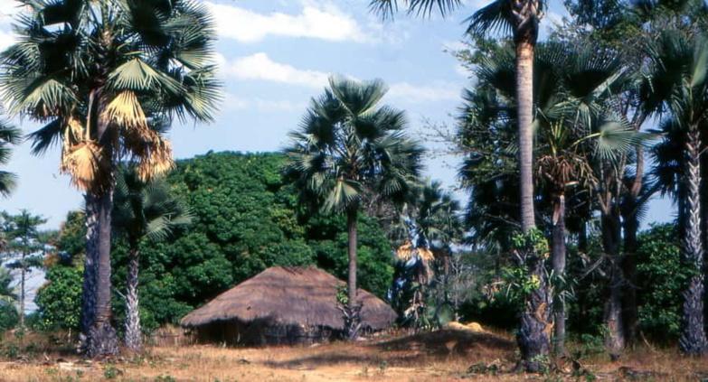Casamance : la chute d'un rônier tue un militaire (DIRPA)