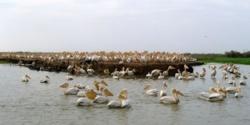 Menace de disparition du Parc de Dioudj : Sur 16.000 hectares, il n'en reste que 6.000.