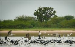 Photo prise à Niassam au Sénégal (D.BOCHEL-GUÉGAN).