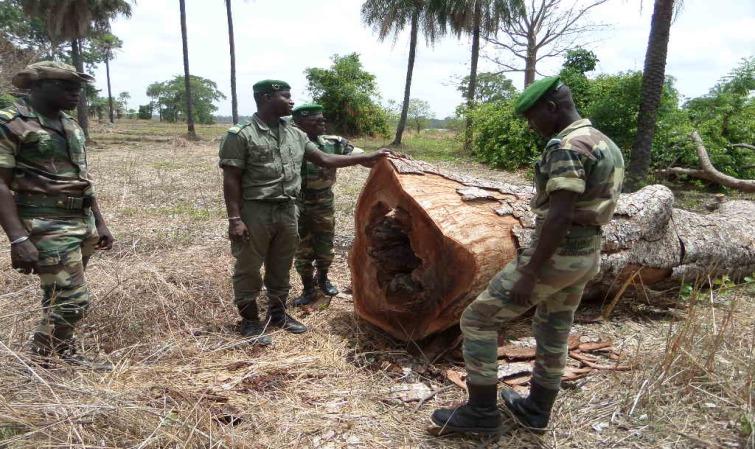 Coupe illicite de bois : plus de 93 millions FCFA de recettes recouvrées en 2020