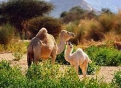 Sénégal/Mauritanie : La transhumance lourdement perturbée !