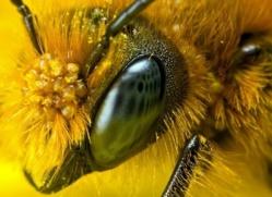 La Russie avertit les États-Unis : la disparition des abeilles provoquerait une 3ème guerre mondiale