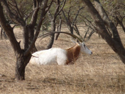 Connais-tu la réserve Spéciale de Faune de Gueumbeul ?