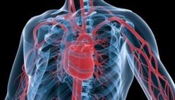 Les maladies cardiovasculaires, première cause de mortalité au monde