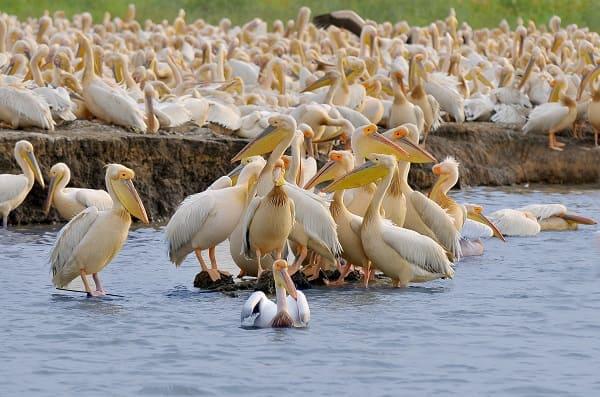 Le Parc National des Oisieaux du Djoudj