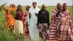 Malaise au sein de la Mutuelle d'épargne et de crédit de la Feprodes: Difficultés de recouvrer une dette globale de 400 millions