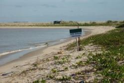 Environnement- Saint-Louis: A qui profite ce crime ?