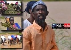 Offensive contre l'érosion côtière : des milliers de palétuviers plantés à Dièle Mbame.
