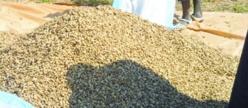 Campagne arachidière: l'Etat maintient le prix à 200 F CFA, malgré le boycott des huiliers