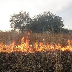 Linguère : un feu de brousse en cours dans la zone du ranch de Doly (témoins)