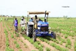 Le Japon offre 8.083 tonnes d'engrais au Sénégal