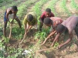 Trafic d'enfants : Un camion arrêté au Sénégal avec 22 jeunes guinéens