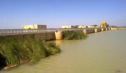 Aménagement des surfaces cultivables : Le chercheur Ousmane Thiam déplore la sous-exploitation du potentiel hydro-agricole de Diama