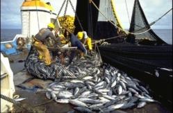 Pêche : Après 8 ans, 38 navires de l'Ue autorisés à pêcher au Sénégal