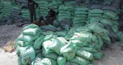 Assistance d'urgence à 12.000 ménages agricoles vulnérables : Un projet de la Fao de 243 millions de FCfa lancé à Saint-Louis
