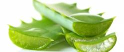 5 remèdes naturels pour traiter les piqûres d'insectes