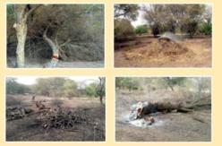 Le comité de défense de la faune et de la faune de Podor interpelle les autorités.