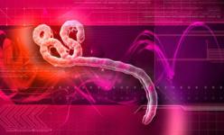 Le chlorure de magnésium peut stopper les effets du virus Ebola !