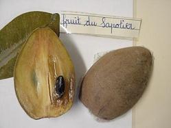 Les vertus de l'huile végétale de la noix de Sapote.
