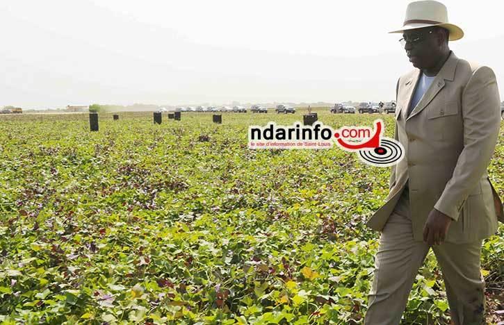 Podor: les agriculteurs exposent leurs doléances à Macky Sall