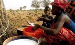 Production laitière: plaidoyer pour réduire la facture