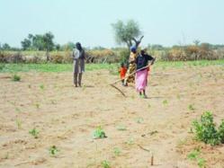 CRISE ALIMENTAIRE AU NORD SENEGAL: l'insécurité alimentaire menace 3 millions  de personnes.