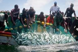 Baisse de l'activité de la pêche à Saint-Louis (moins 18,3%) en 2014.