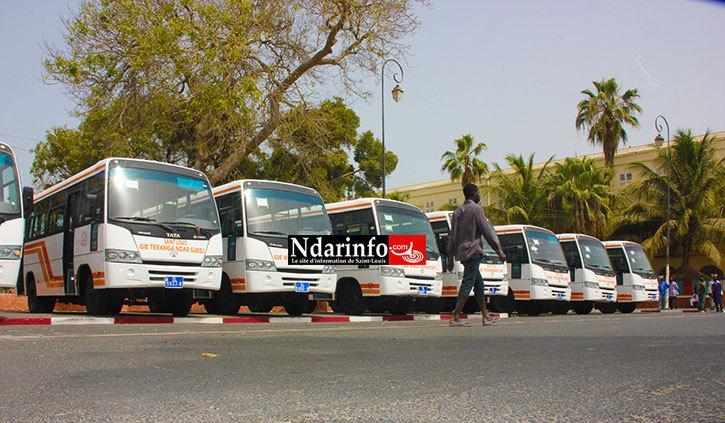 SAINT-LOUIS: les 50 nouveaux bus roulent aujourd'hui.