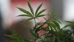 """La vente de cannabis atteint son """"plus haut historique"""""""
