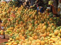 La mangue peut contribuer au développement socioéconomique (directrice)