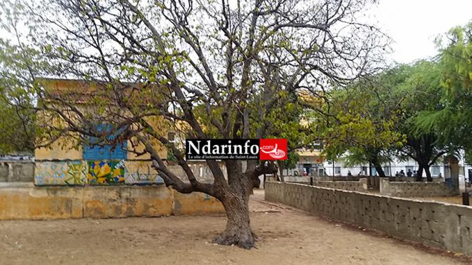 PENDAISON A NDIOLOFFENE: un homme s'est suicidé dans la cour de l'école Macodou NDIAYE.
