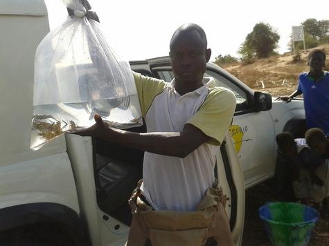 Les membres du projet « Espoir pour la santé » ont relâché un grand nombre de crevettes à proximité d'un des deux villages sénégalais étudiés. Après un an et demi, le nombre d'escargots infectés par les parasites a baissé de 80%.