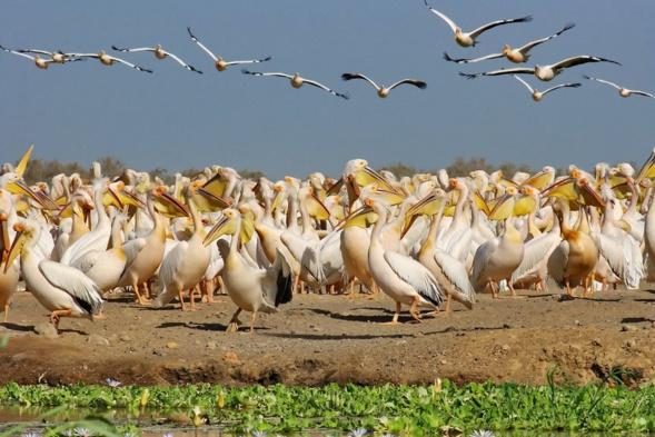 """"""" Djoudj, le paradis des oiseaux migrateurs """", prix du meilleur film ..."""