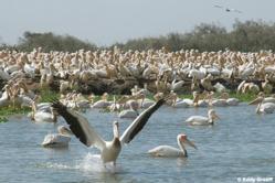 1ère Edition du concours sur le tourisme durable : Orni Tourisme Sénégal séduit le jury