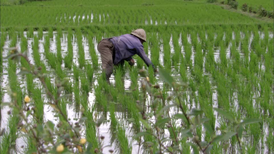Campagne agricole 2016-2017 : 5 milliards de FCfa pour emblaver 15.600 hectares.