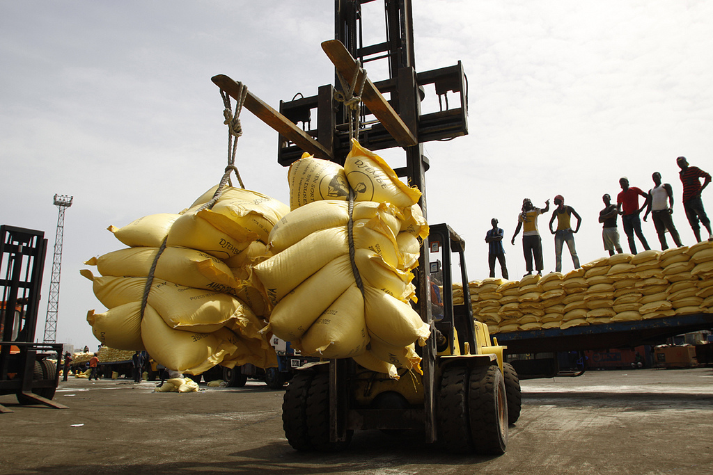 L isra met en garde contre les dangers du riz import - Charancon du riz dangereux ...