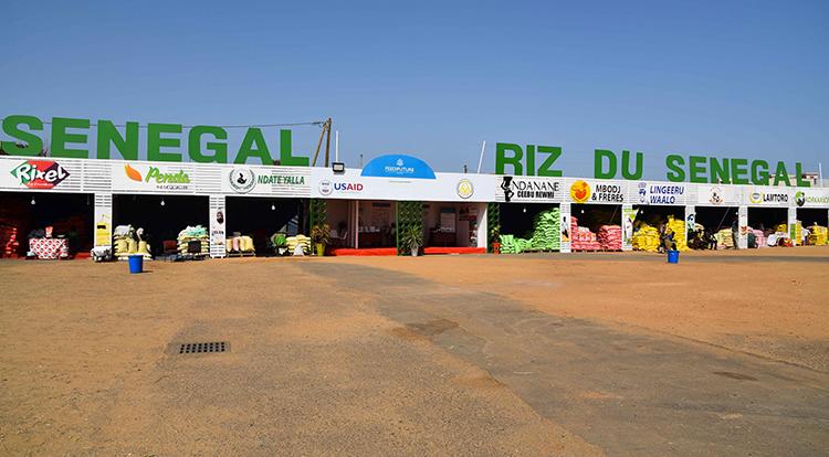 Le Riz local sénégalais au cœur de la FIARA 2017 ( photos )