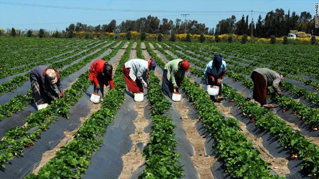 Regard sur l'expérience du Programme des domaines agricoles communautaires au Sénégal