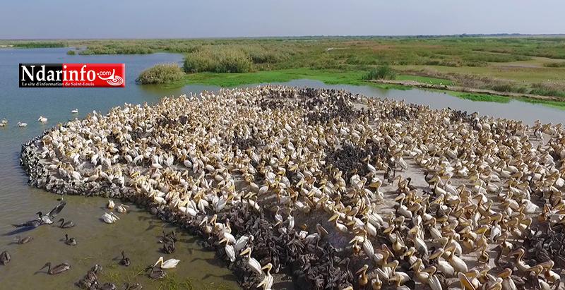Le PARC DU DJOUDJ, une perle écologique menacée ( documentaire )
