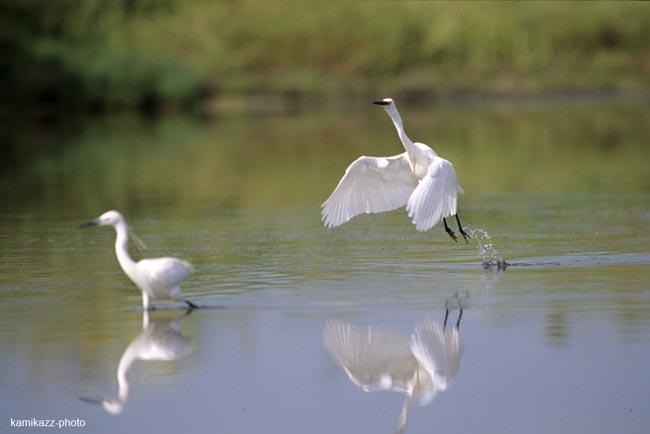 """La réserve de NDIAEL a retrouvé l'eau qui """"coule de source, ainsi que la présence des oiseaux migratoires"""" (UICN)"""