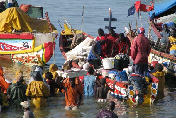Nouakchott contribue à la sécurité alimentaire de Saint-Louis, selon le ministre mauritanien des Pêches