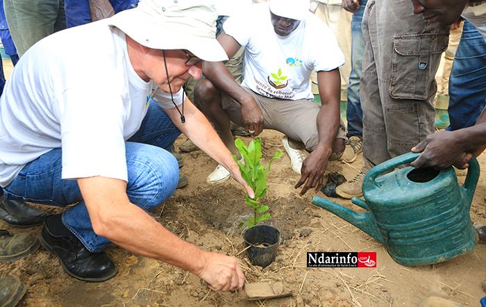 Compagnie Sucrière Sénégalaise : 300 plants d'anacardiers plantés dans la zone de la « grande mare » (vidéo)