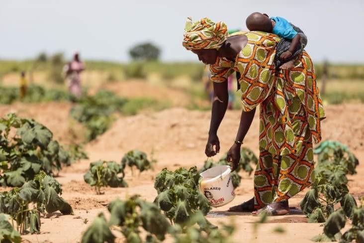 Riposte contre l'insécurité alimentaire : le Sénégal peine à trouver 1 milliard pour son plan d'urgence