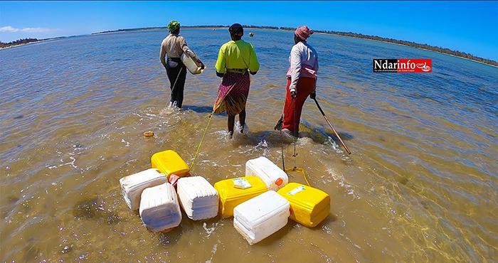 GANDIOL : Oumar GUEYE remet des équipements et financements aux « Sirènes », lundi (vidéo)