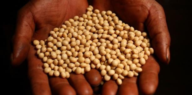 Semences, intrants et matériels agricoles : le Forum civil dénonce un scandale sur un financement de 400 milliards Cfa