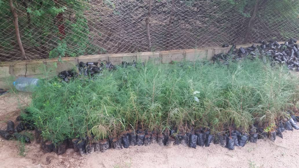 Lutte contre l'avancée de la mer : reboisement de plus de 2000 plants sur la zone du PNLB (photos)