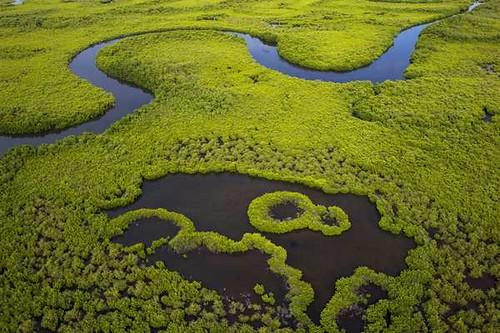 La Gambie et le Sénégal décident de s'unir pour préserver leur mangrove