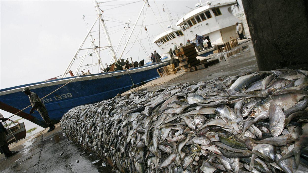 Les scandales en série du secteur de la pêche