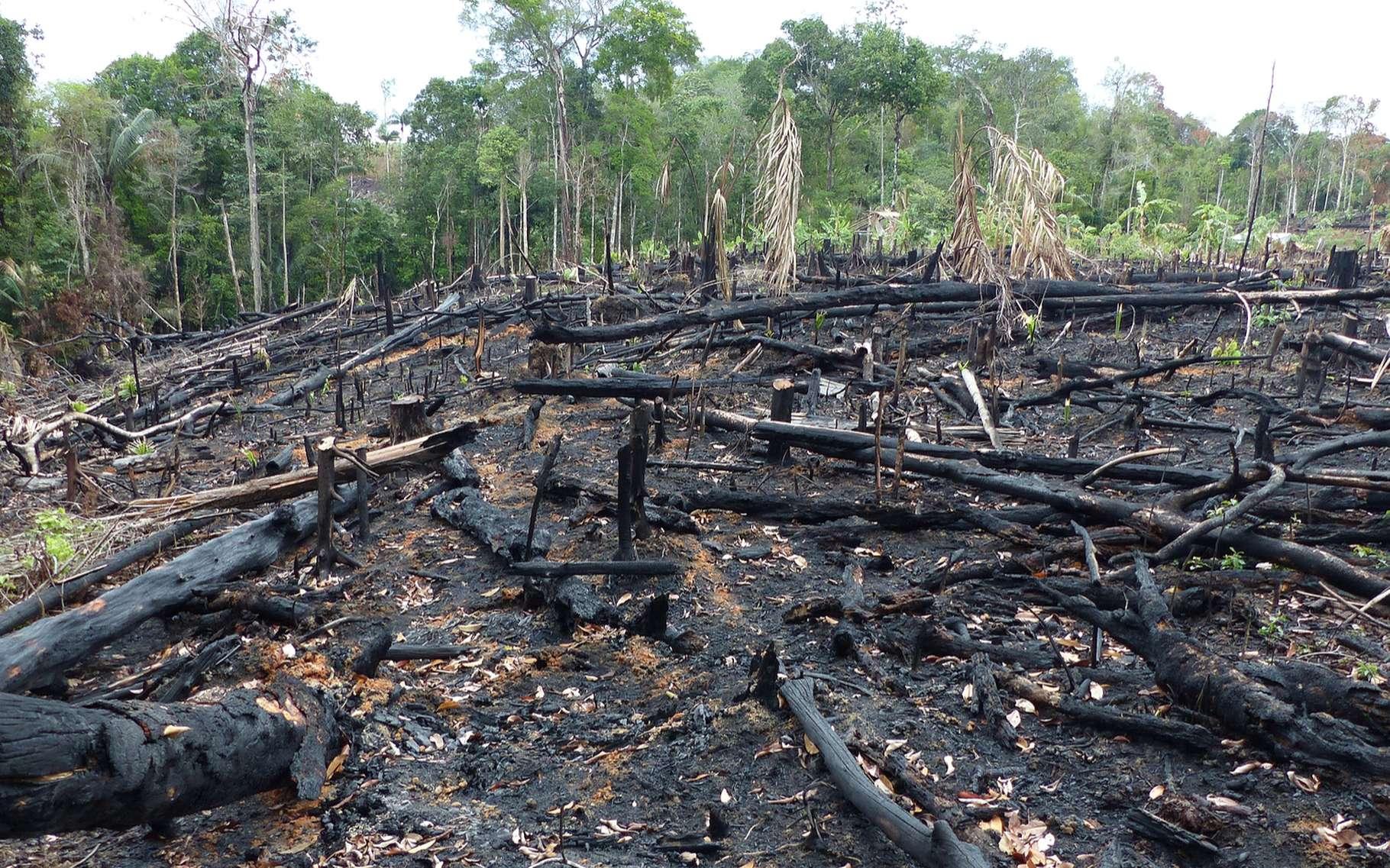 Brésil: hausse de 25% de la déforestation de l'Amazonie au premier semestre (officiel)